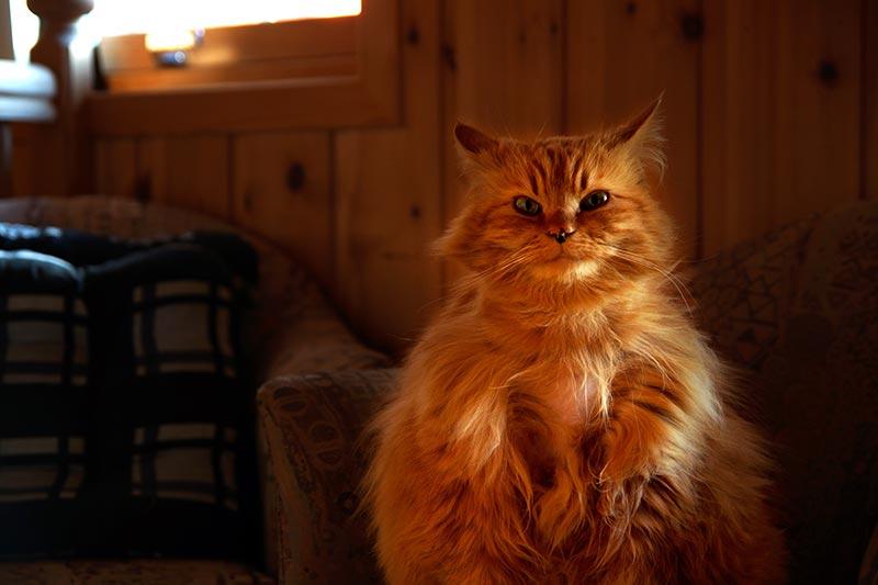 Photo de chat à Tournus, graphiste